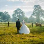 bride-groom-walking-field-horse