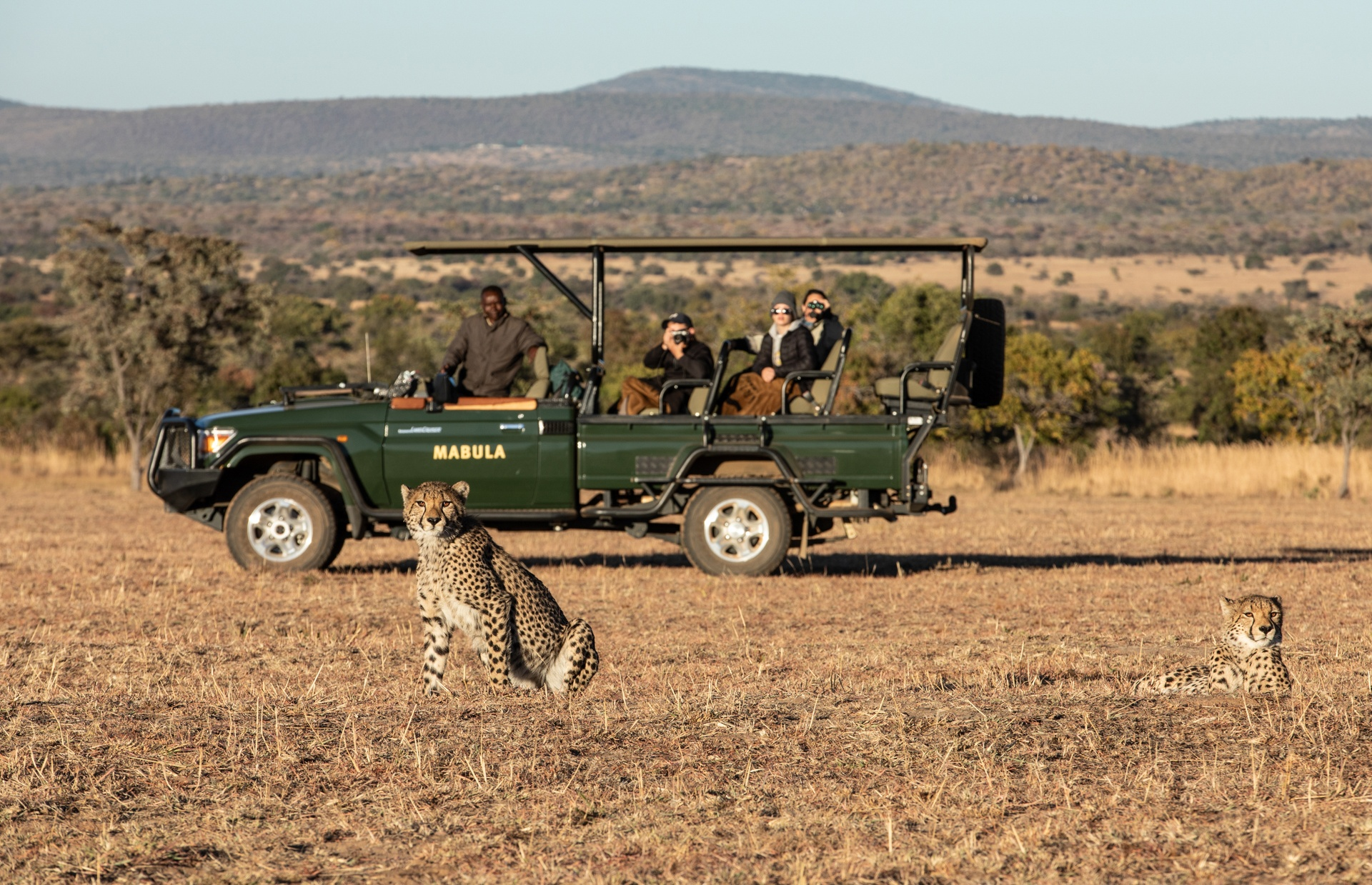 safari-game-drive-cheetah