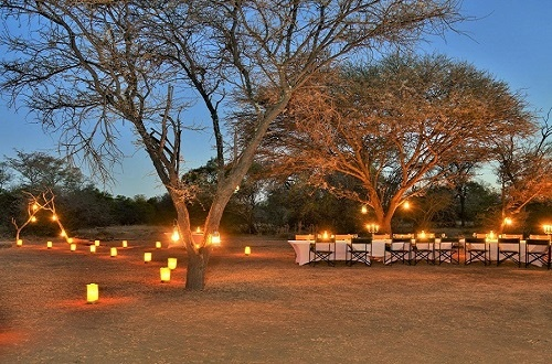 bush-dinner-lanterns-lights