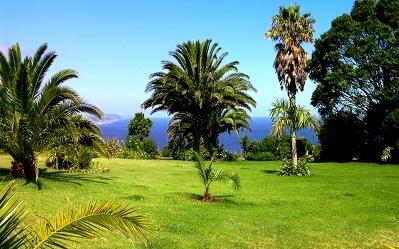 lawn-palm-tree-sky