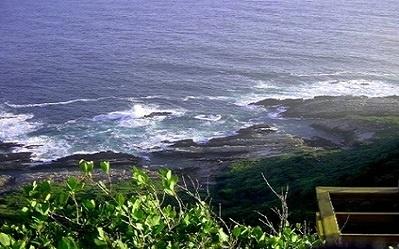 ocean-rocks-bush