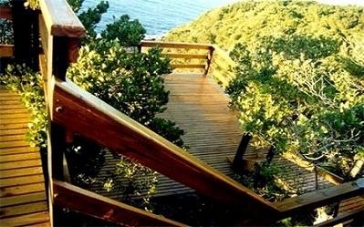 deck-wooden-bush-sea