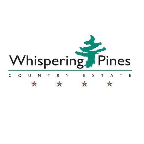green-pine-tree-whispering-stars